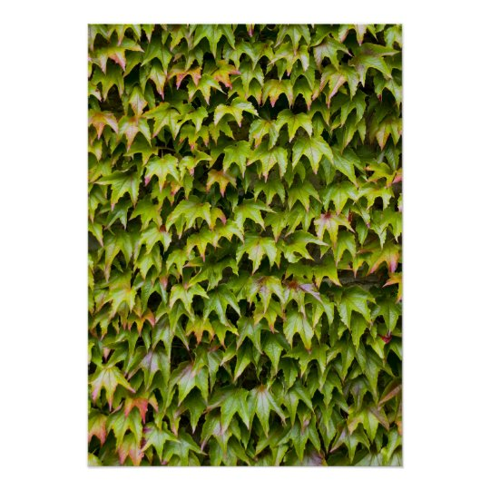 Virginia Creeper Print