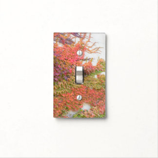 VIRGINIA CREEPER/TENDRILS ACROSS WALL/FALL COLORS LIGHT SWITCH COVER