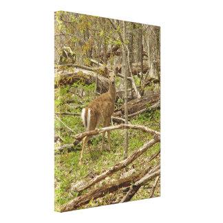 Virginia Deer Stretched Canvas Print