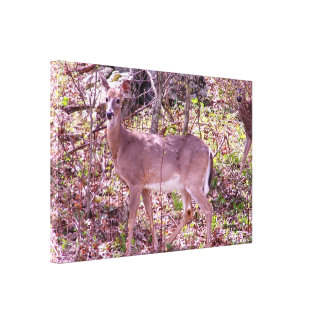 Virginia deer Stretched Gloss Canvas Print