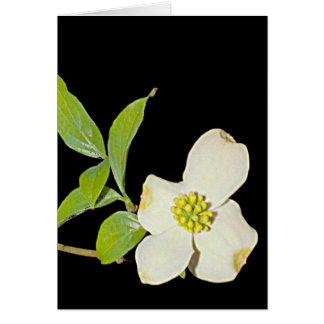 Virginia Dogwood Card