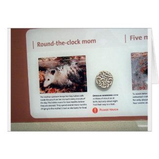 Virginia opossum (Didelphis virginiana), marsupial Card