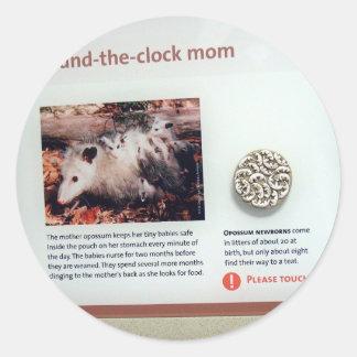 Virginia opossum (Didelphis virginiana), marsupial Classic Round Sticker