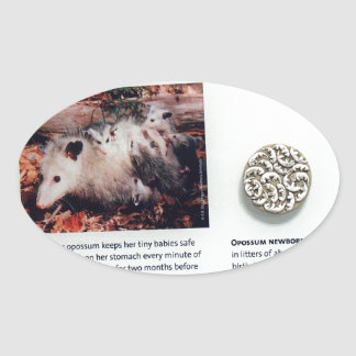 Virginia opossum (Didelphis virginiana), marsupial Oval Sticker