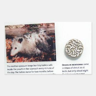 Virginia opossum (Didelphis virginiana), marsupial Rectangular Sticker