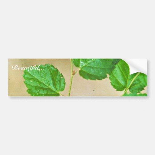 Virginia Round-leaf Birch Car Bumper Sticker