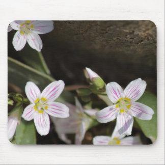 Virginia Spring Beauties Mouse Pad