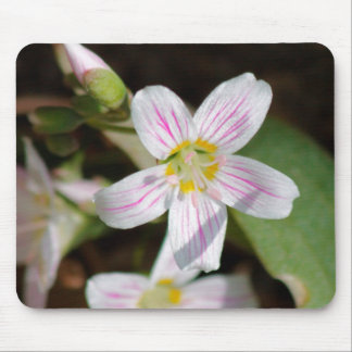 Virginia Spring Beauty Mouse Pad