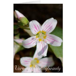 Virginia Springbeauty Card