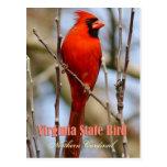 Virginia State Bird - Northern Cardinal Postcard