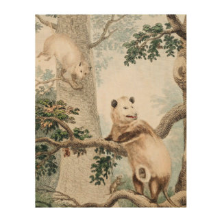 Virginian Opossum Wood Wall Art