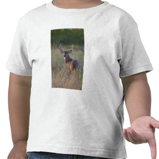 virginianus blanco-atado del Odocoileus de los ci Camisetas