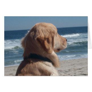 Virrey en la playa tarjeton