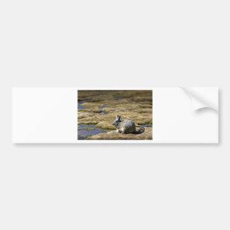 Viscacha sunbathing in the Atacama desert Chile Bumper Sticker
