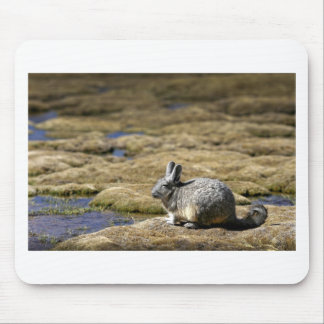 Viscacha sunbathing in the Atacama desert Chile Mouse Pad