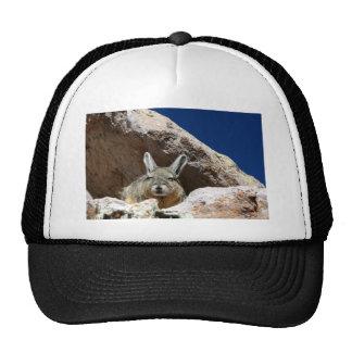 Viscacha sunbathing in the Atacama desert Chile Trucker Hat