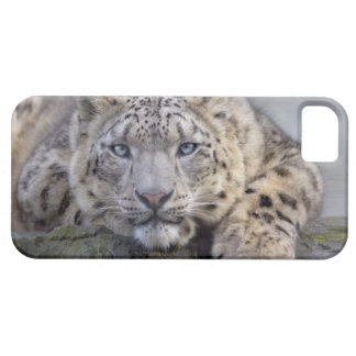 Vishnu Snow Leopard iPhone 5 Case-Mate Case