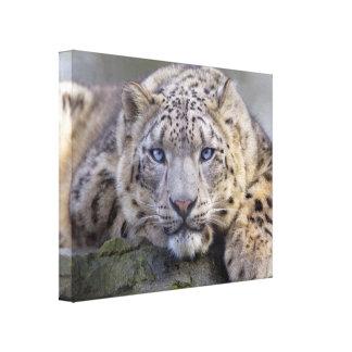 Vishnu Snow Leopard Wrapped Canvas Print