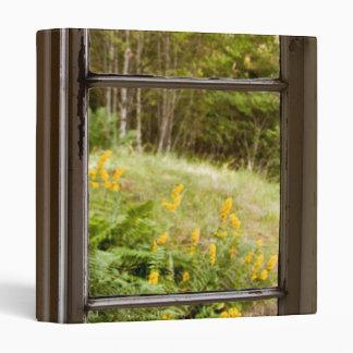 Visión a través de la ventana vieja
