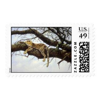 Visión desde arriba, leopardo envio