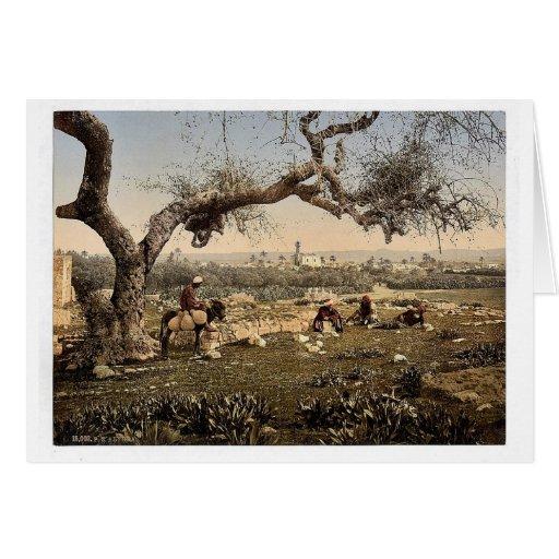 Visión desde el sudoeste, Lydda, Tierra Santa, (es Felicitacion