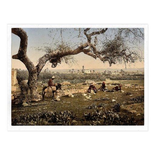 Visión desde el sudoeste, Lydda, Tierra Santa, (es Tarjeta Postal