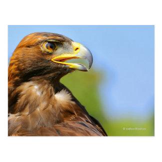 Vision of a Golden Eagle Postcard