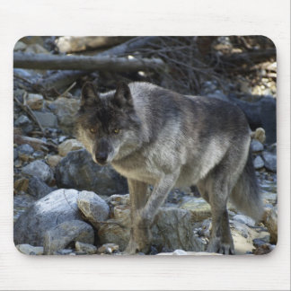 Vision Quest Grey Wolf Mousepad