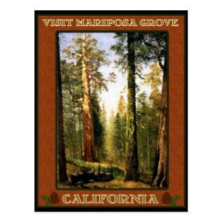 Visit Mariposa Grove Postcard