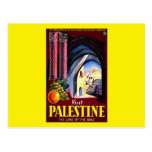 Visit Palestine The Land Of The Bible Postcards