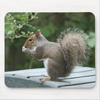 Visiting Squirrel Luncheon Mousepad