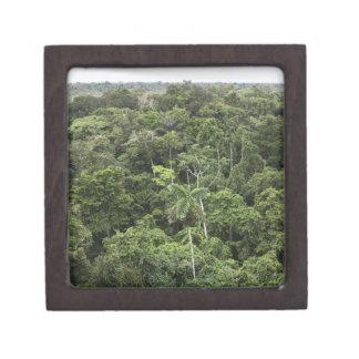 Vista aérea de la selva tropical del Amazonas Caja De Recuerdo De Calidad