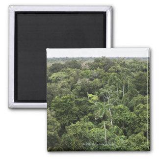 Vista aérea de la selva tropical del Amazonas Iman De Frigorífico