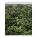 Vista aérea de la selva tropical del Amazonas Impresiones