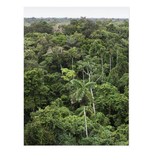 Vista aérea de la selva tropical del Amazonas Tarjeta Postal