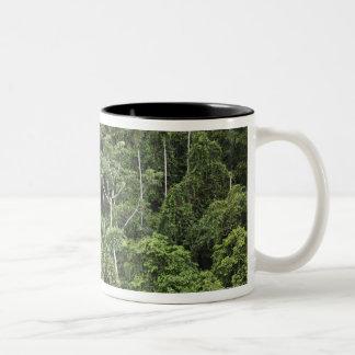 Vista aérea de la selva tropical del Amazonas Taza Dos Tonos