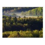 Vista aérea del bosque en la ensenada de Cades, gr Tarjeta Postal
