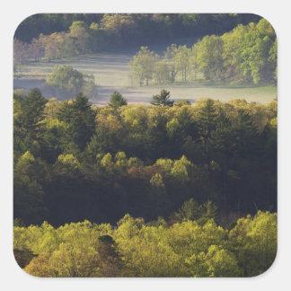 Vista aérea del bosque en la ensenada de Cades, Pegatina Cuadrada