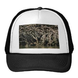 Vista cercana de las raíces rojas del mangle gorro