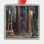 Vista de árboles grandes en la arboleda de adorno cuadrado plateado