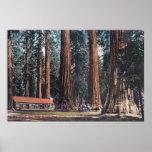 Vista de árboles grandes en la arboleda de Maripos Poster
