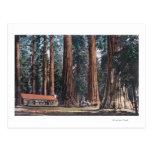 Vista de árboles grandes en la arboleda de postales