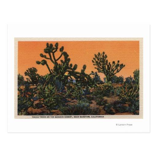 Vista de los árboles de la yuca en el desierto del tarjeta postal