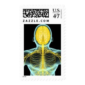 Vista de los nervios en el cuerpo superior desde sellos postales