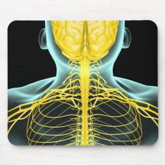 Vista de los nervios en el cuerpo superior desde tapete de ratones