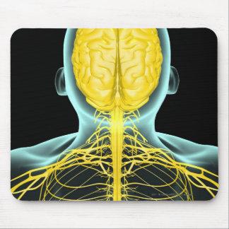 Vista de los nervios en el cuerpo superior desde tapetes de raton