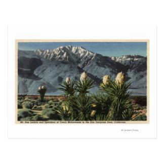 Vista de Mt. San Jacinto, yuca Mohavensis Tarjetas Postales