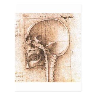Vista de un cráneo de Leonardo da Vinci C. 1489 Tarjeta Postal