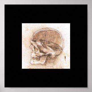 Vista de un cráneo de Leonardo da Vinci circa 1489 Impresiones