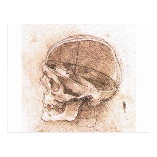 Vista de un cráneo de Leonardo da Vinci circa 1489 Postales
